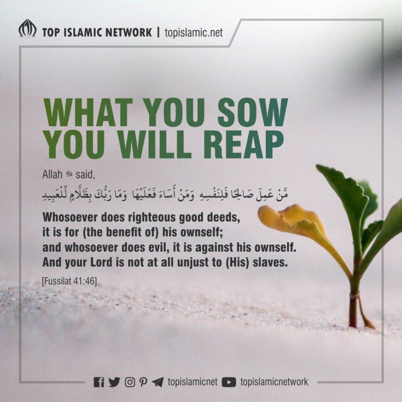 What You Sow You Will Reap⁣